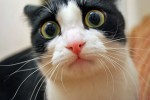 Cat-Pictures-Funny