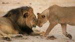 cecil-the-lion%27s-killer-revealed-as-american-dentist